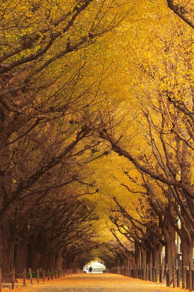 amazing-tree-tunnels-10