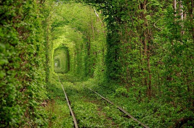 amazing-tree-tunnels-2-1