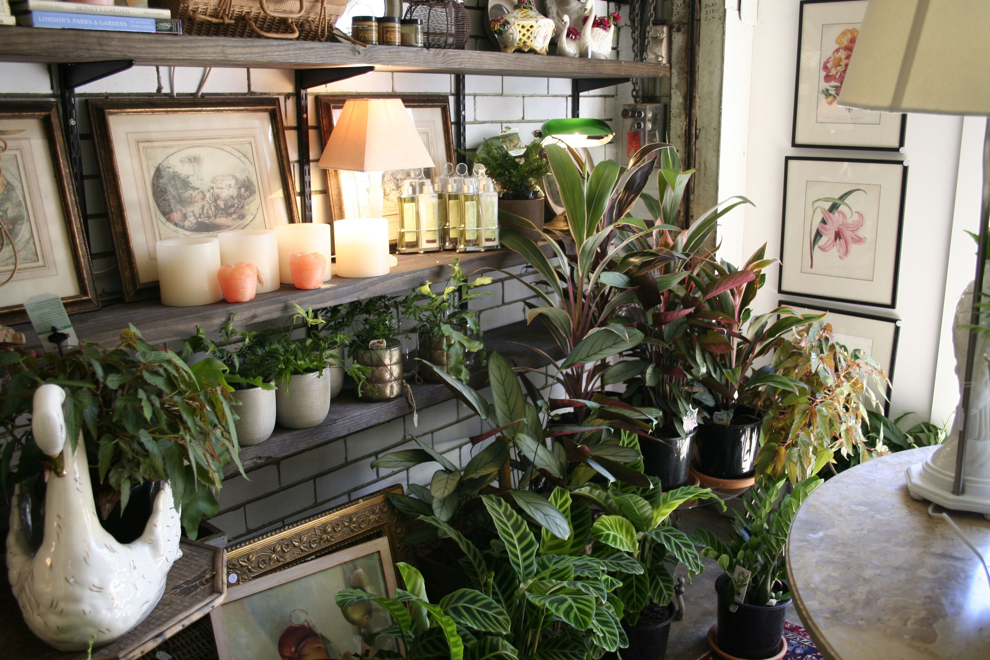 The Potting Shed | Heirloom perennials, advanced buxus, edibles